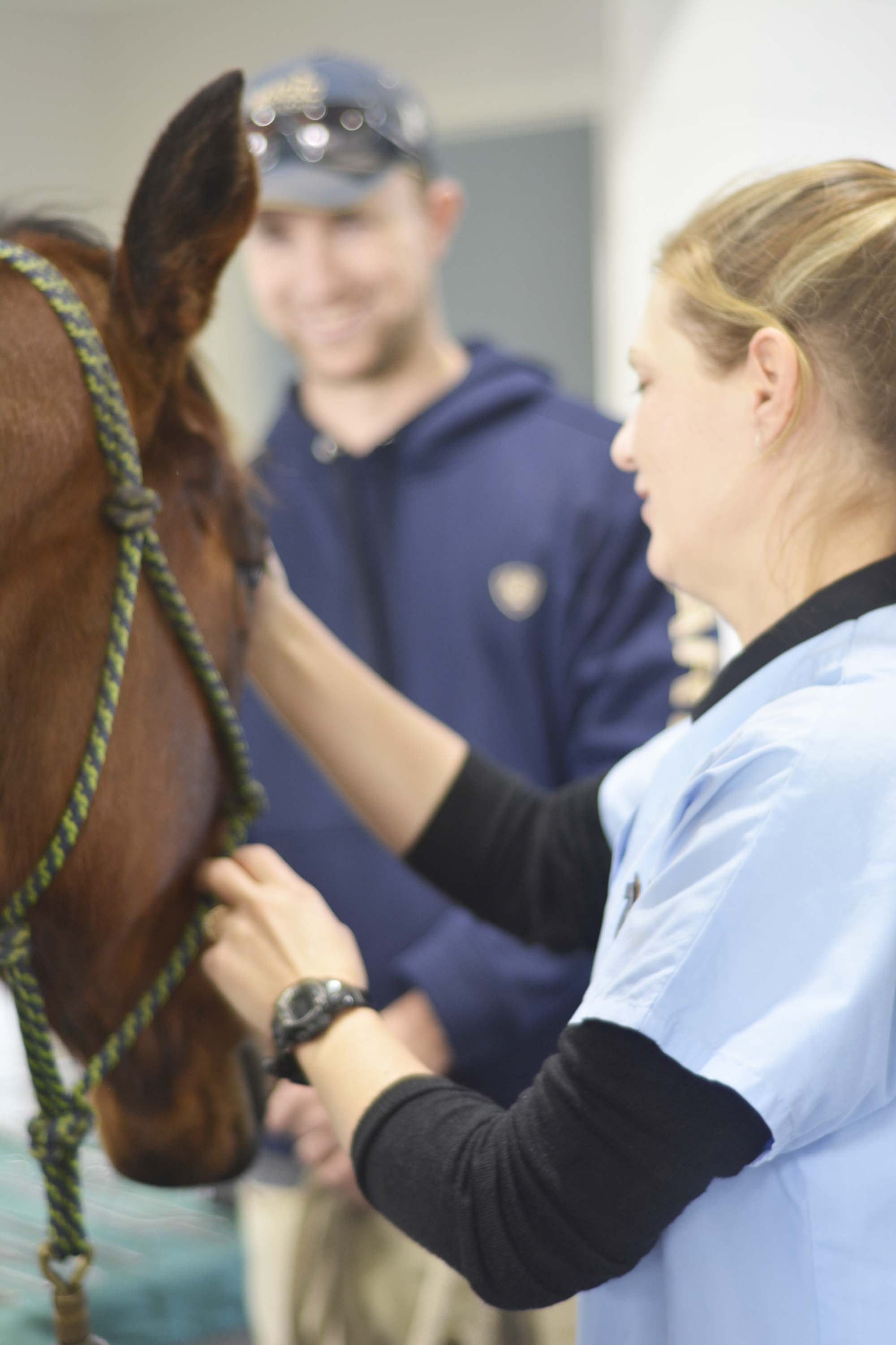 horse dentist Perth, horse dentistry Perth, veterinary dentistry Perth, horse vet dentist, horse veterinary dentistry, equine veterinary dentistry, vet dentist Perth, veterinary dentist Perth, vet dentistry Perth, equine dentist Perth, equine dentistry Perth, equine Dentistry WA, equine vet dentist, Kirsten Jackson, Kirsten Jackson Dentist, Dr Kirsten Jackson, Kirsten Jackson horse dentist, Kirsten Jackson veterinary dentist, Horse dentist Forrestdale, Vet dentist Forrestdale, Veterinary dentistry Forrestdale